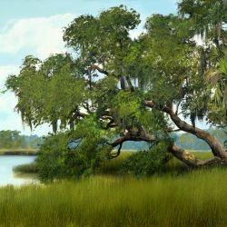 Southern Oak Canopy