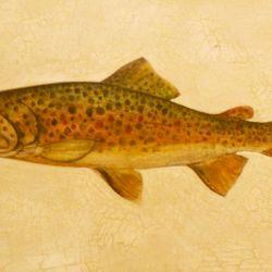 Fish Series