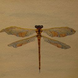 Dragonfly Series I