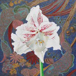Amaryllis: Fragmented Kimono
