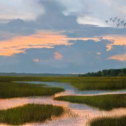 Ponte Vedra Marsh (with Ducks)