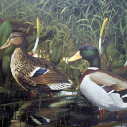 Mallards of Deerwood