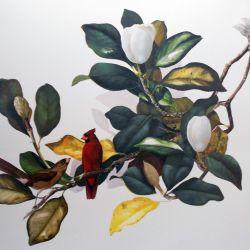 Cardinal in Spring Magnolia
