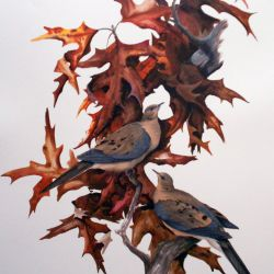 Mourning Doves II