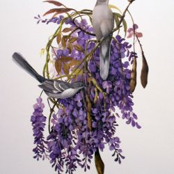 Mockingbird in Wisteria