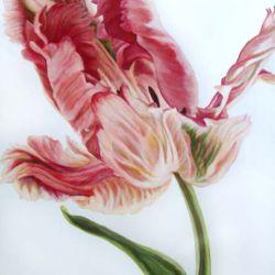 Parrot Tulip IV