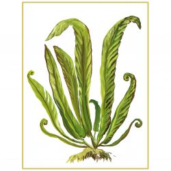 Botanical 9