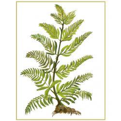 Botanical 16