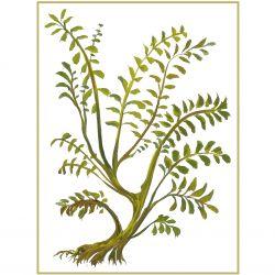 Botanical 17